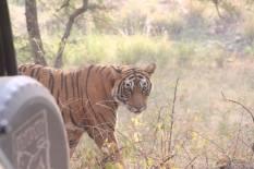 Tiger Hawa Mahal