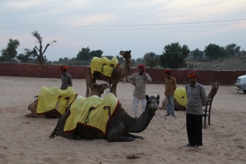 Pick a camel, any camel!