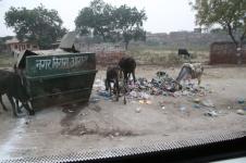 India Trash